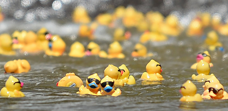 Advocates for Children in Bartow County races ducks to raise money and awareness.