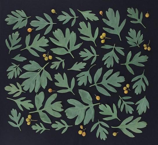 Botanical Pattern by Anastasia Tumanova