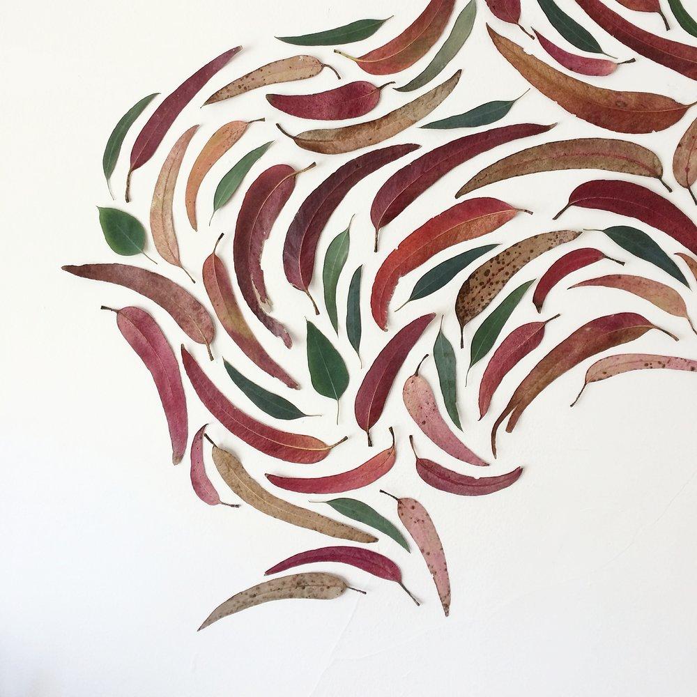 Eucalyptus Leaf Mural - EUCALYPTUS LEAVES / JUNE 2017