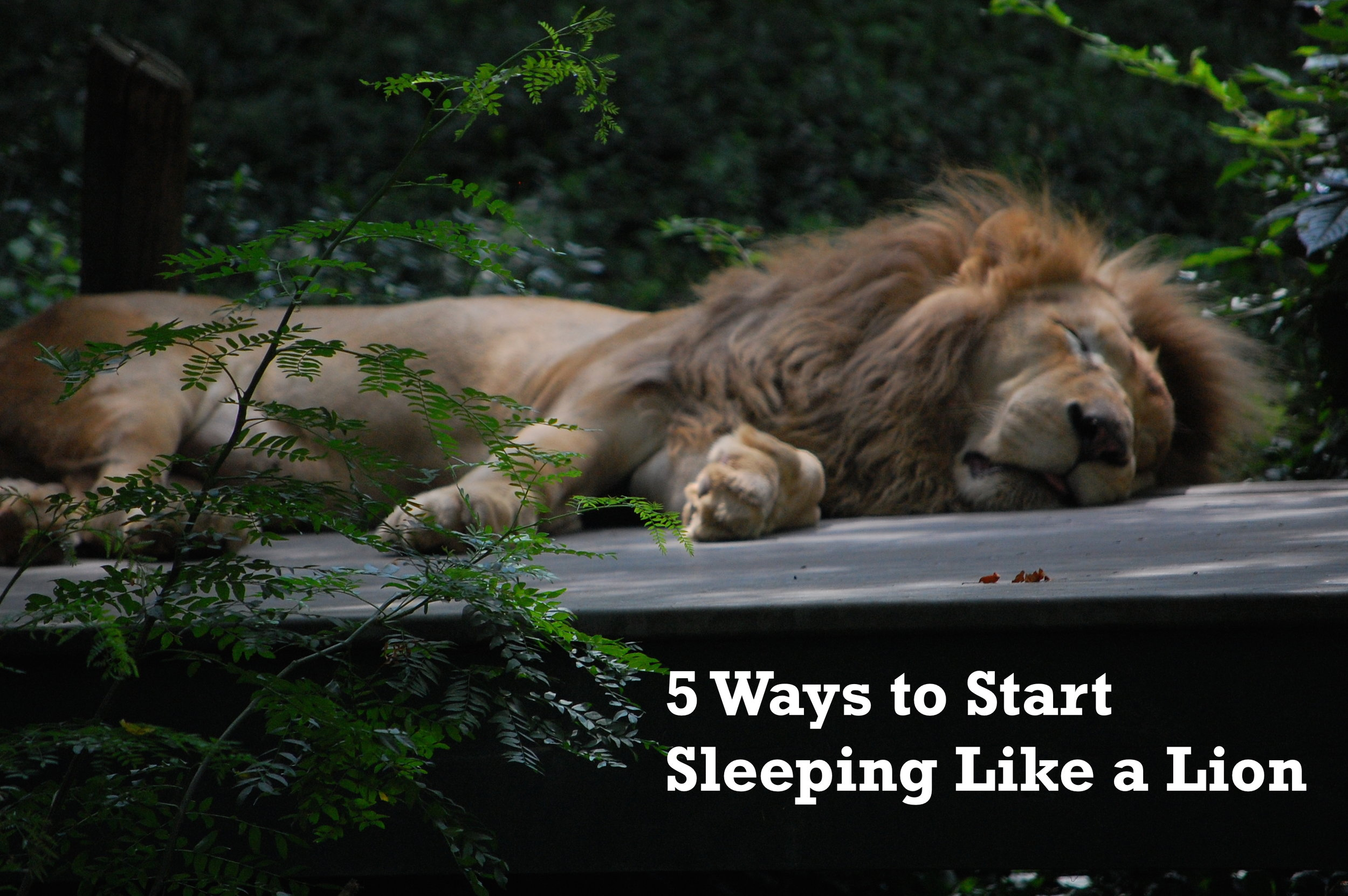 5 Ways to Start Sleeping Like a Lion