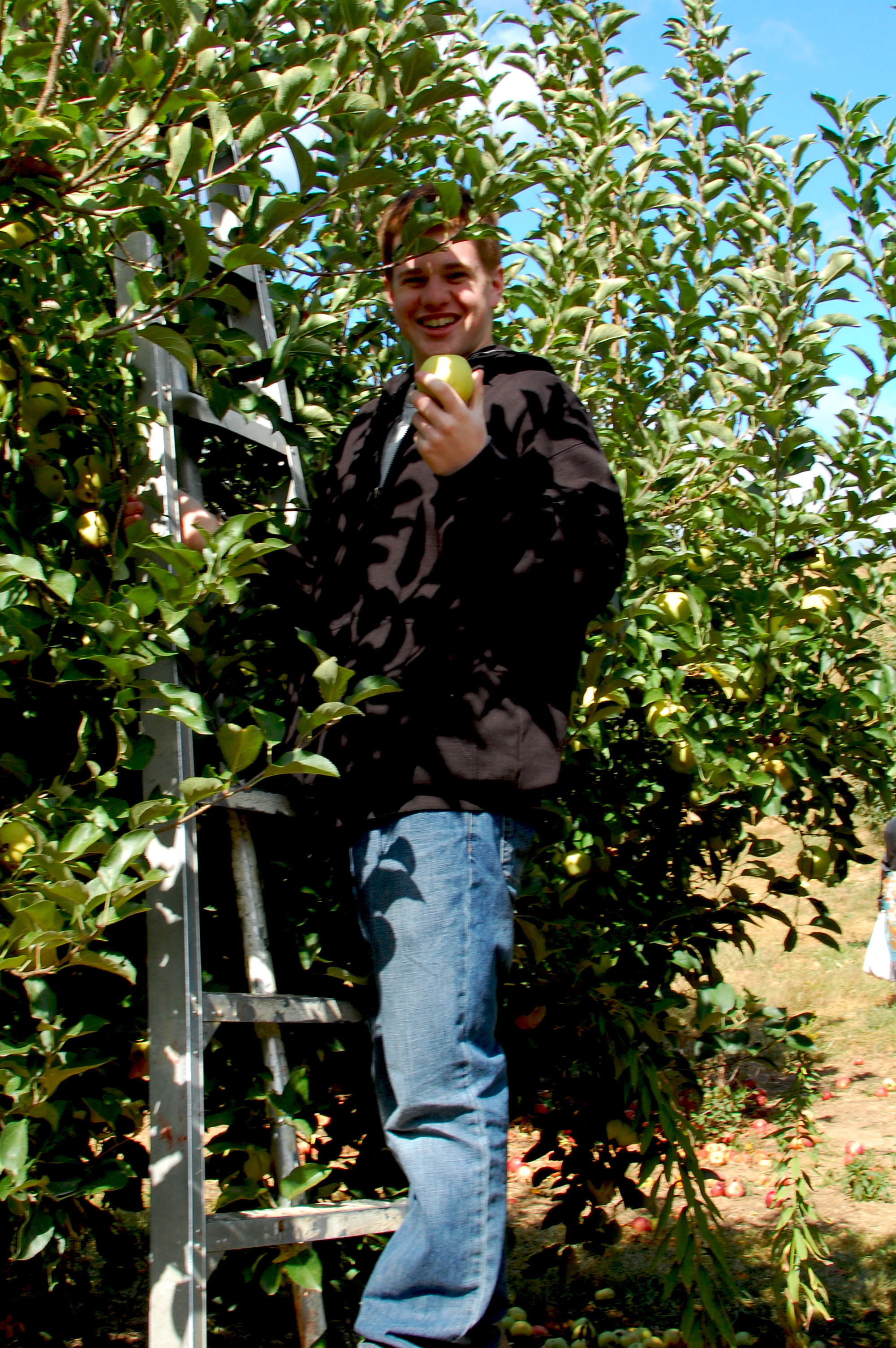 Picking your own Apples is not only awesome, but ensures that you get the freshest and highest quality.