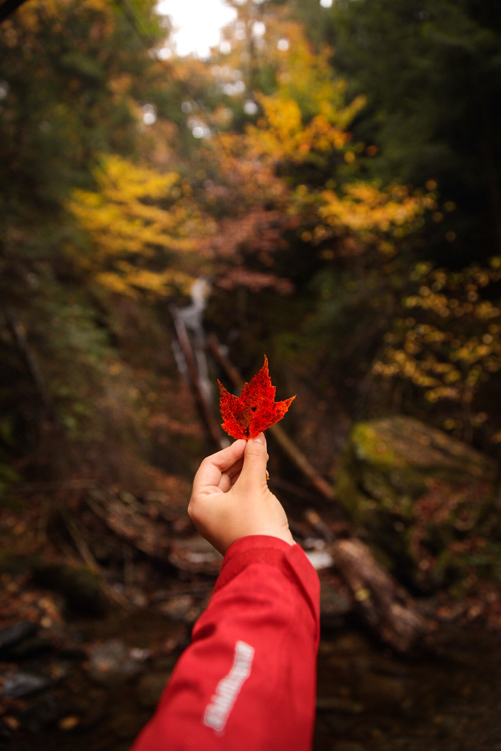 Leaf and Waterfall-5.jpg
