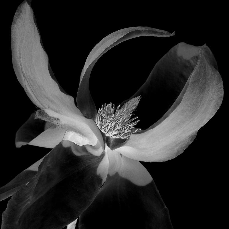 glen_johnston_photography_flora_clematis_2.jpg
