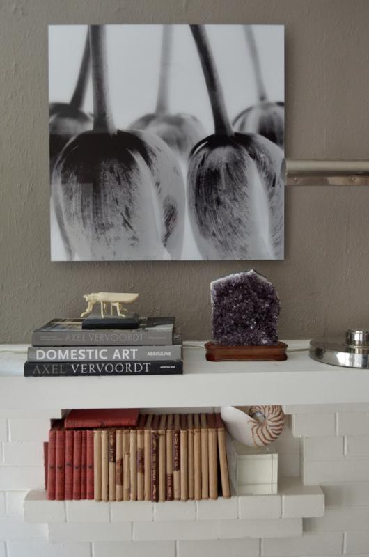 glen_johnston_photography_flora_study.jpg