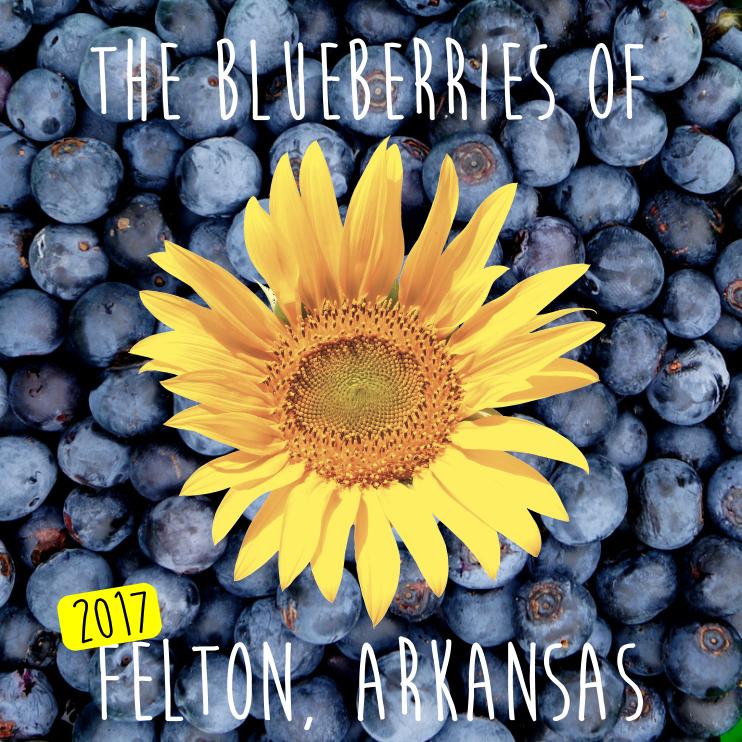 the_blueberries_of_felton_arkansas