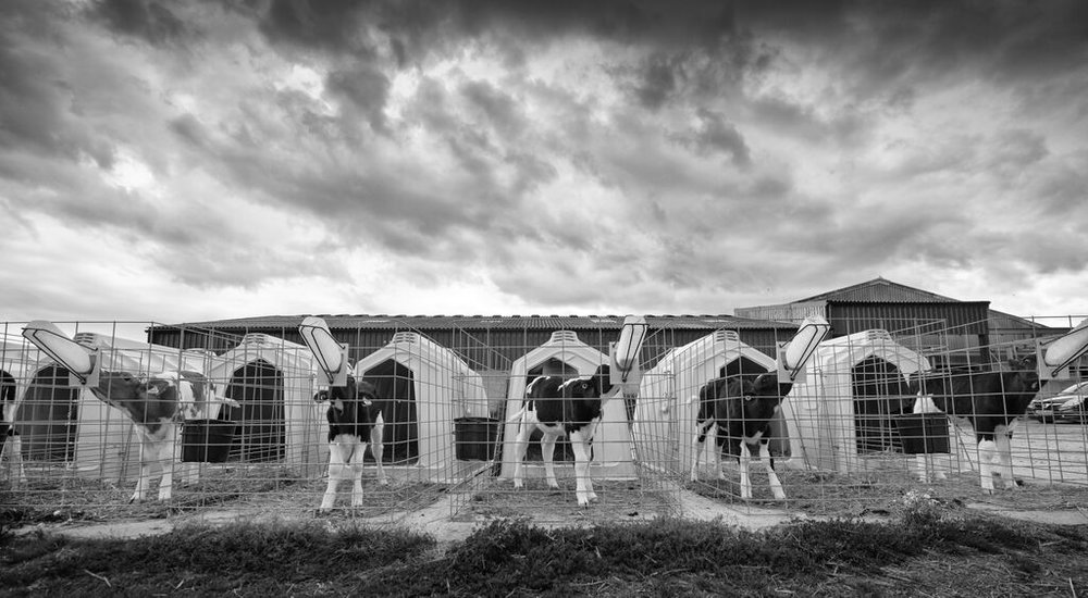 Longmoor Farm, Dorset