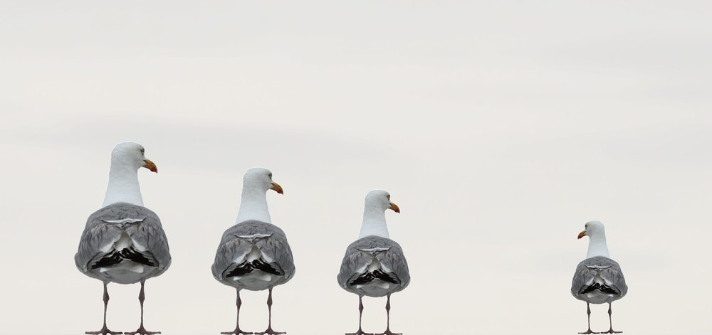 gulls-2662550_1920.jpg
