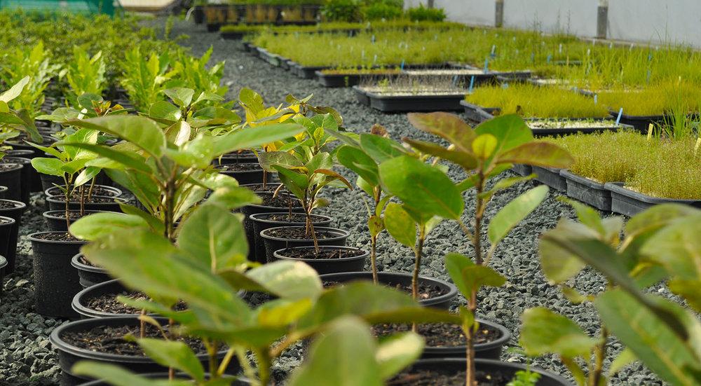 Planting & Restoration