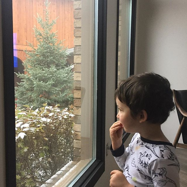 Snow!!! First snow of the year and Tuck's first time seeing it and being old enough to understand. Woke of to screams of wonder! Like our new black window frames? Stage one of this falls ORC @oneroomchallenge