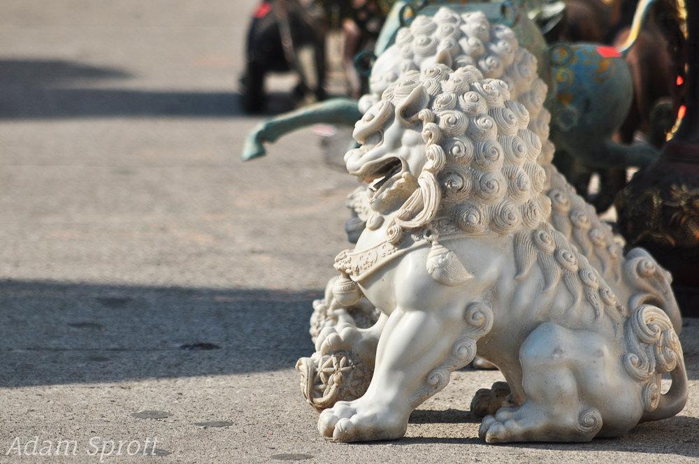 7 Lion 2.jpg