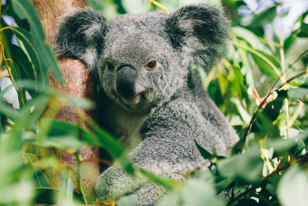 Melissa_Findley-Townsville-Blog--16
