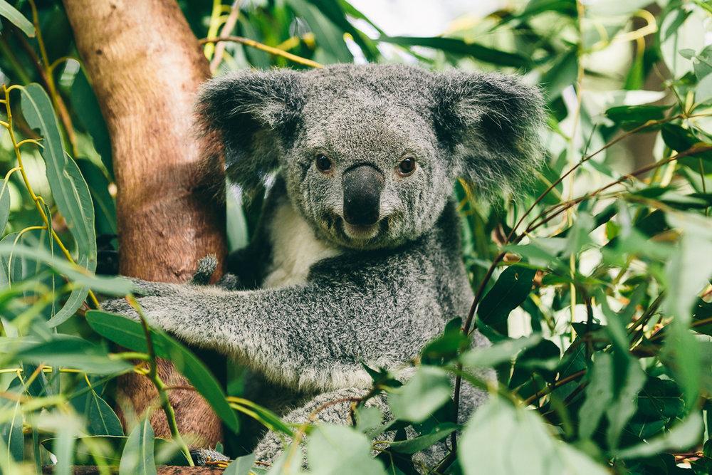 Melissa_Findley-Townsville-Blog--44