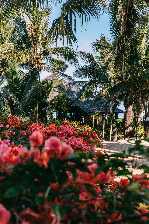 Melissa_Findley-Vanuatu-MFBlog-68
