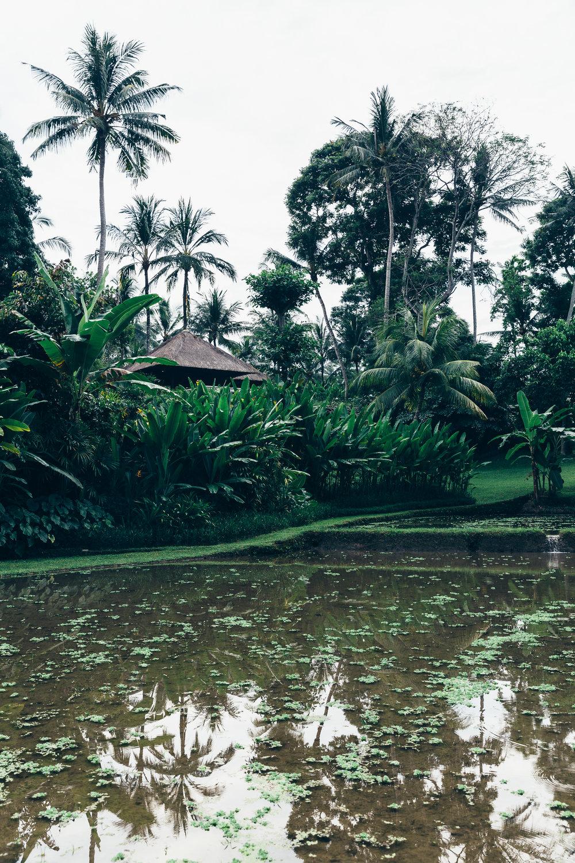 Melissa_Findley-Bali-Blog-28