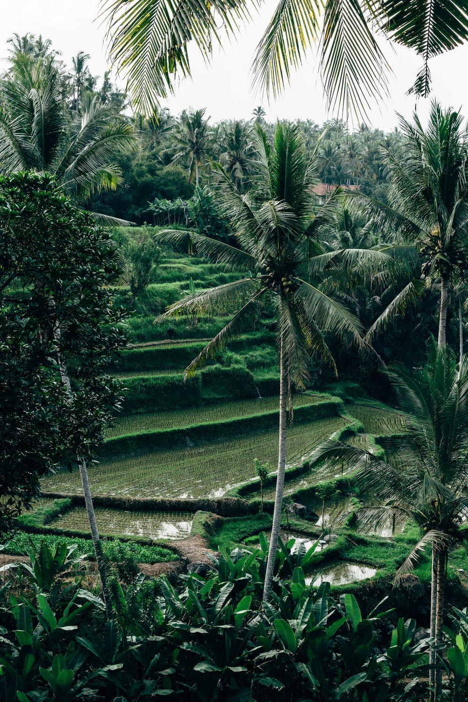 Melissa_Findley-Bali-Blog-6