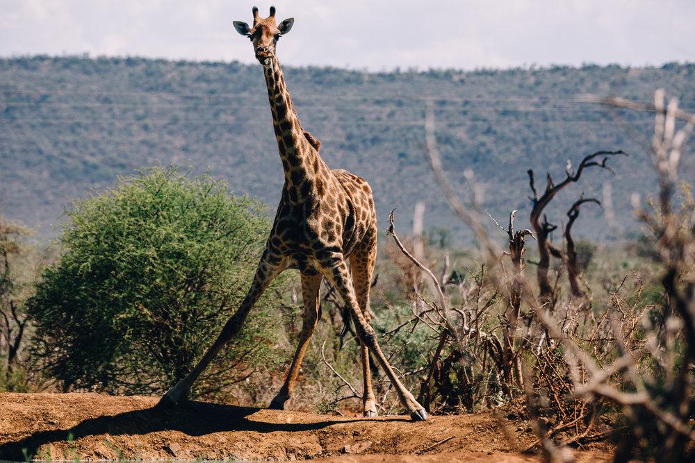 Melissa_Findley-SouthAfrica-Blog-65.jpg