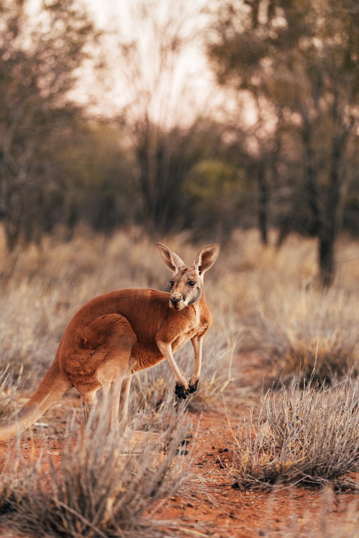 Melissa-Findley-Northern-Territory-Blog-16.jpg