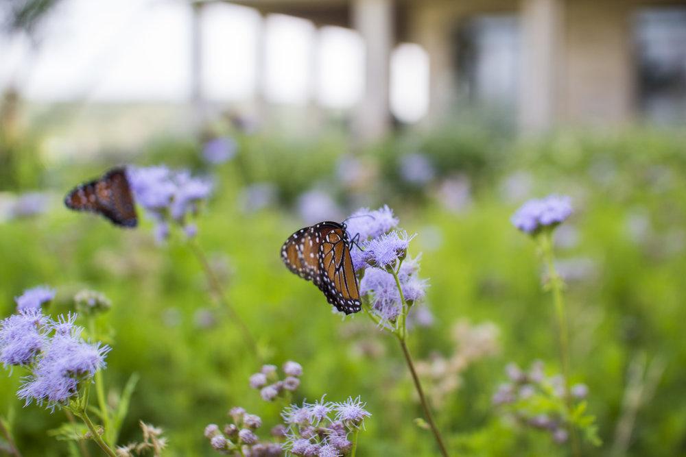 butterflies14.jpg