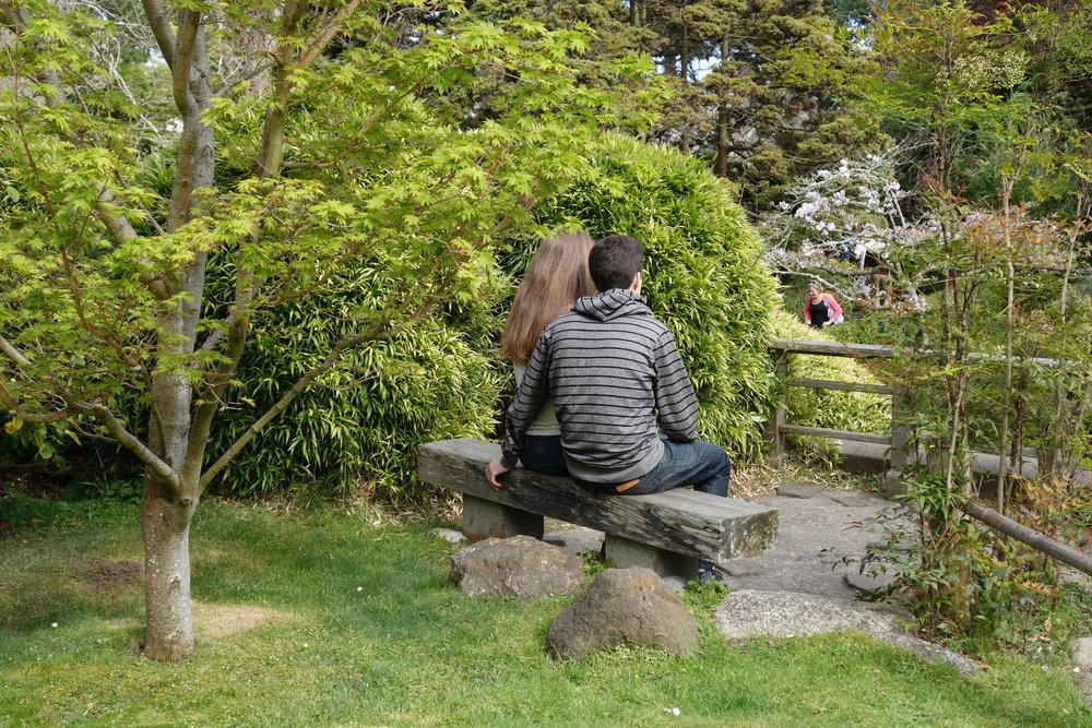 Jap-tea-gdn-pink-spot-10-2x3-02927.jpg