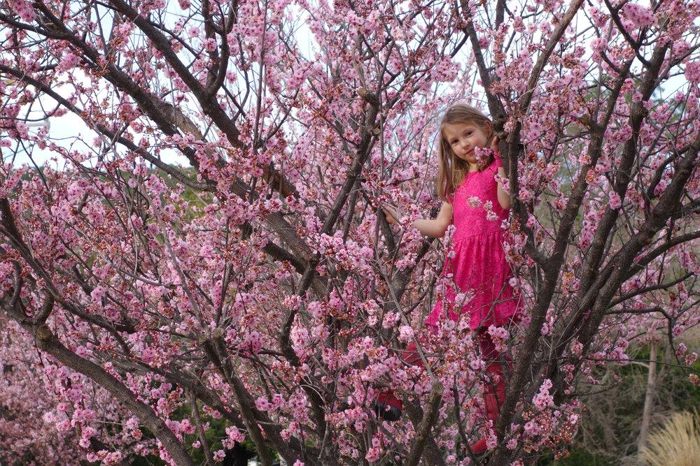 15-Blossom-crop-1-00586.jpg