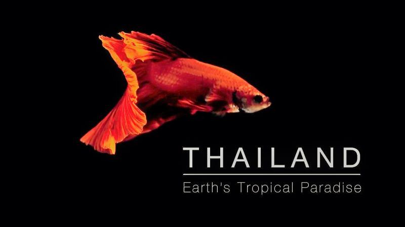 Thailand_Earth's_Trop.jpg