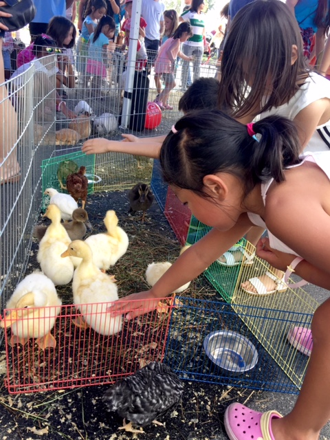 Kids' Zone - with Petting Zoo and Pony Rides