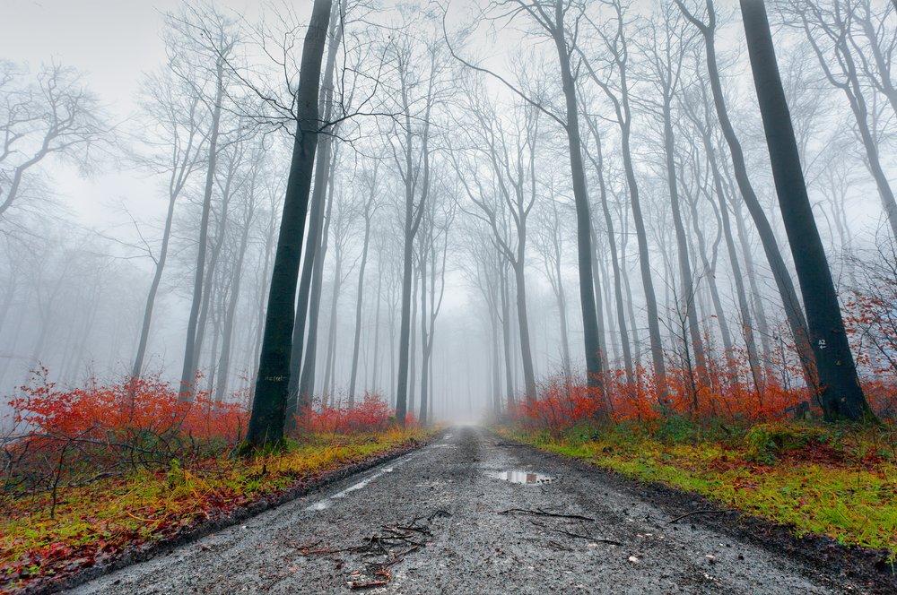 damp-forest_6686223437_o.jpg