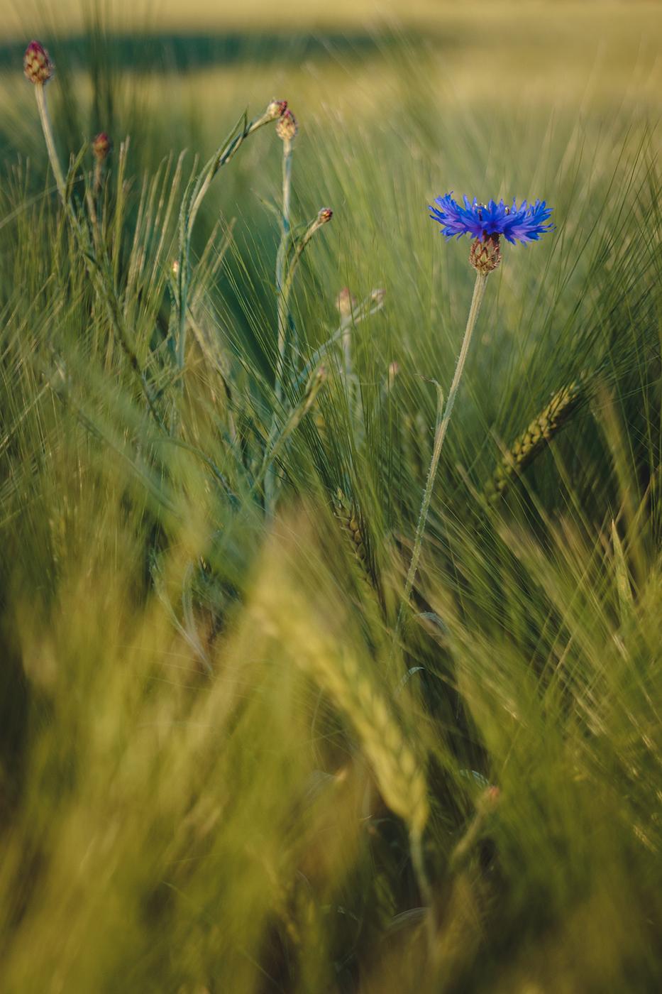 Blue Flower 2.jpg