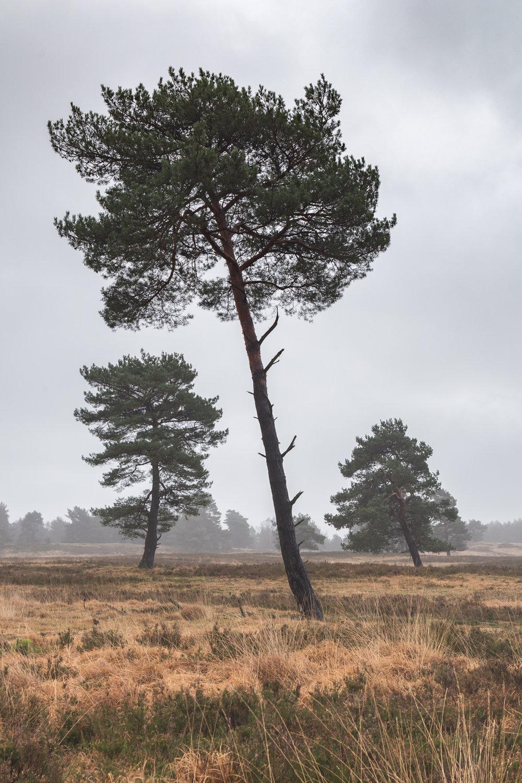 3 Trees (1 of 1).jpg