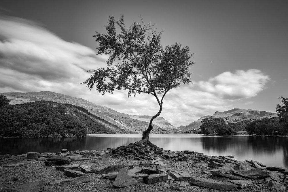 Lone Tree - Snowdonia.jpg