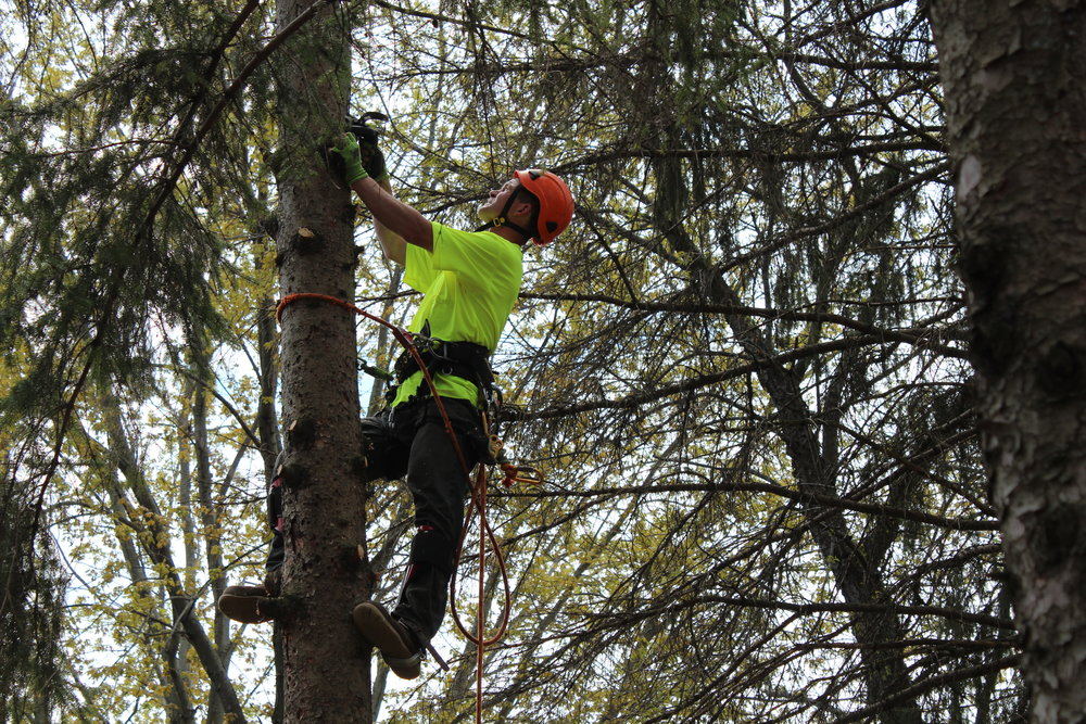 minneapolis-tree-trimming-and-thinning.jpg