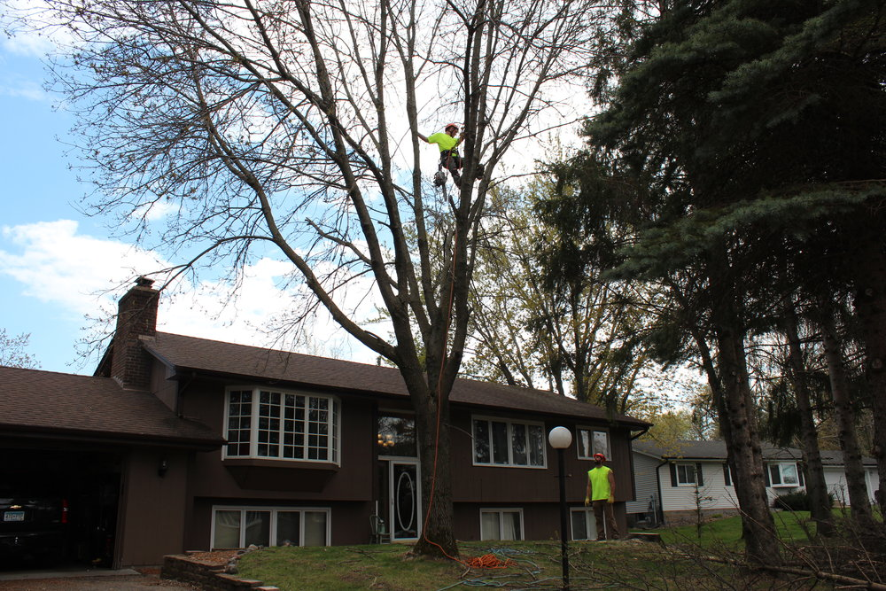 minneapolis-tree-trimming-and thinning.jpg