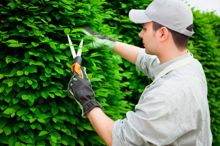 shrub-pruning-bush-pruning-services-snohomish-county.jpg