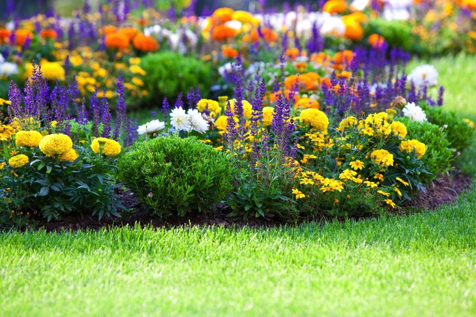 flowering-bed-3.png