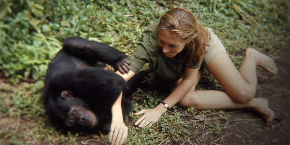 Jane Goodall and a chimpanzee friend in Brett Morgen's Jane.