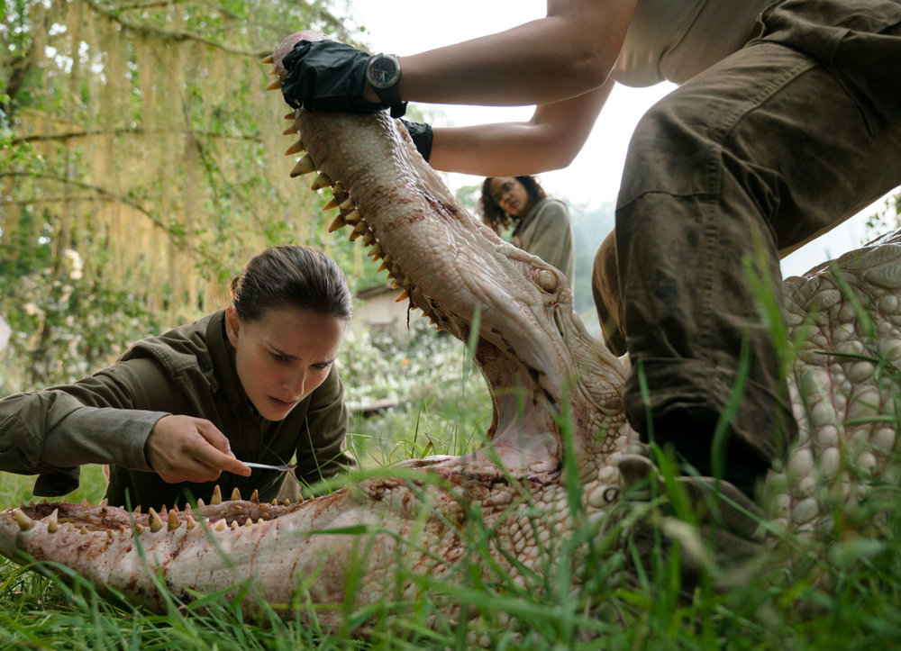 An alligator is not what it appears in Annihilation.