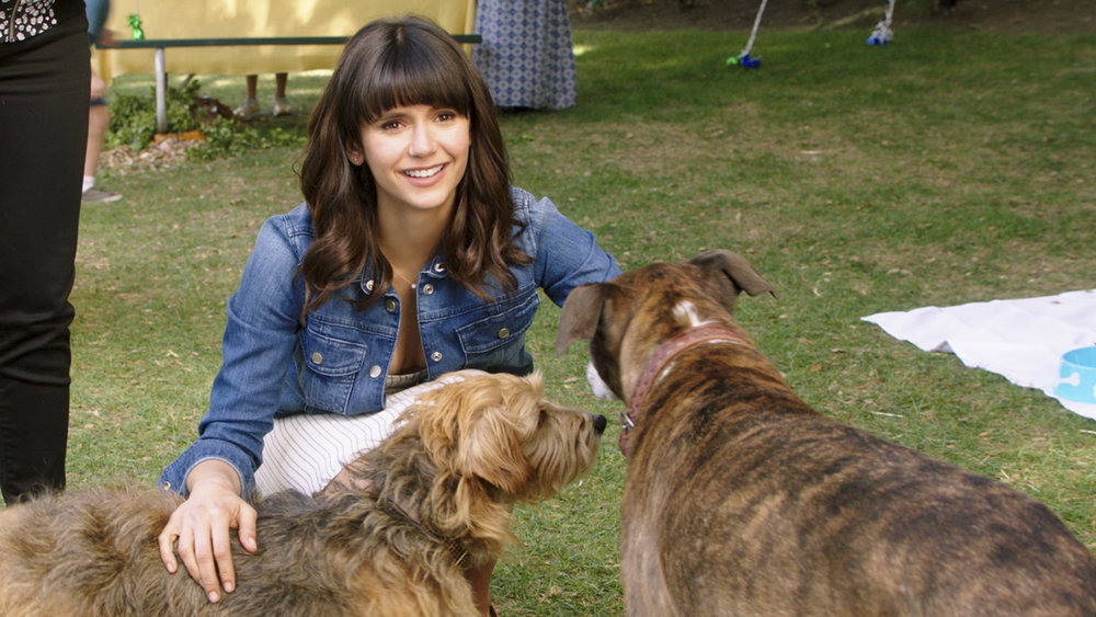 Nina Dobrev plays a morning news host and dog-lover in Dog Days.