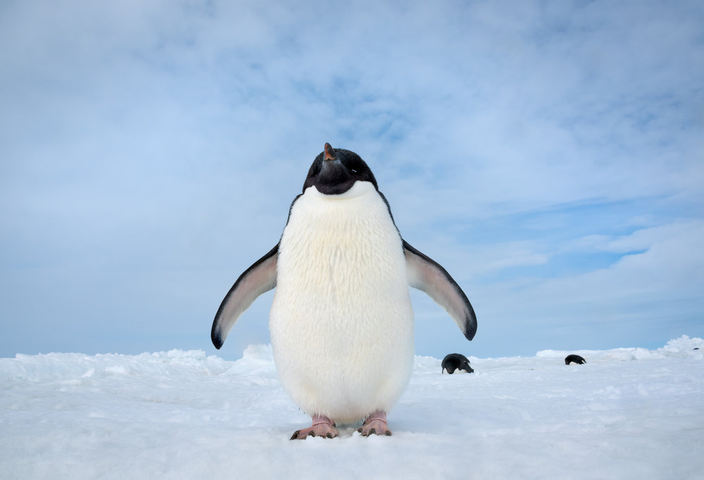 Steve the Penguin has personality. Maybe a bit too much personality.