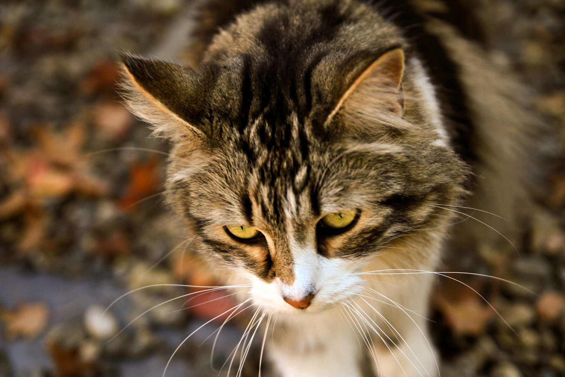 cat-hunting