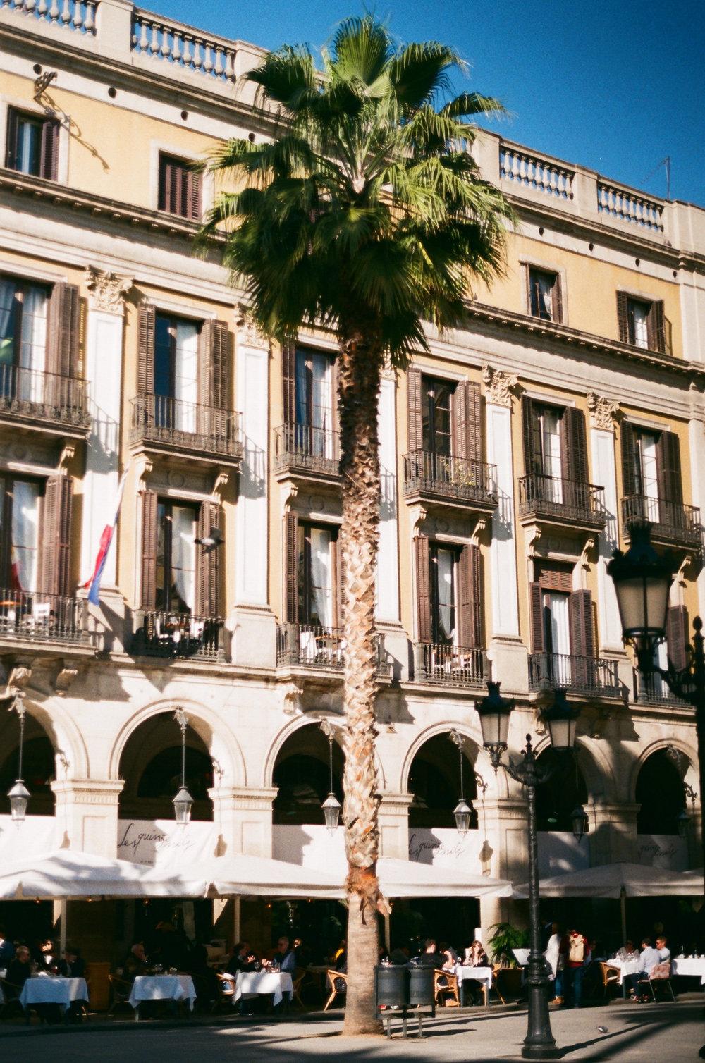 Barcelonatree