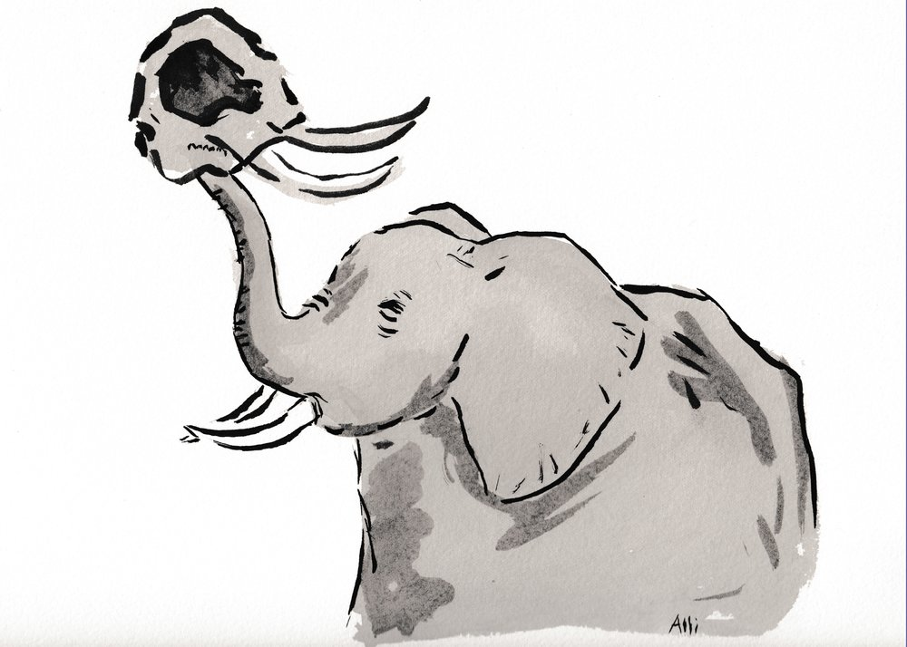 sam_elephants_2_grey.jpg