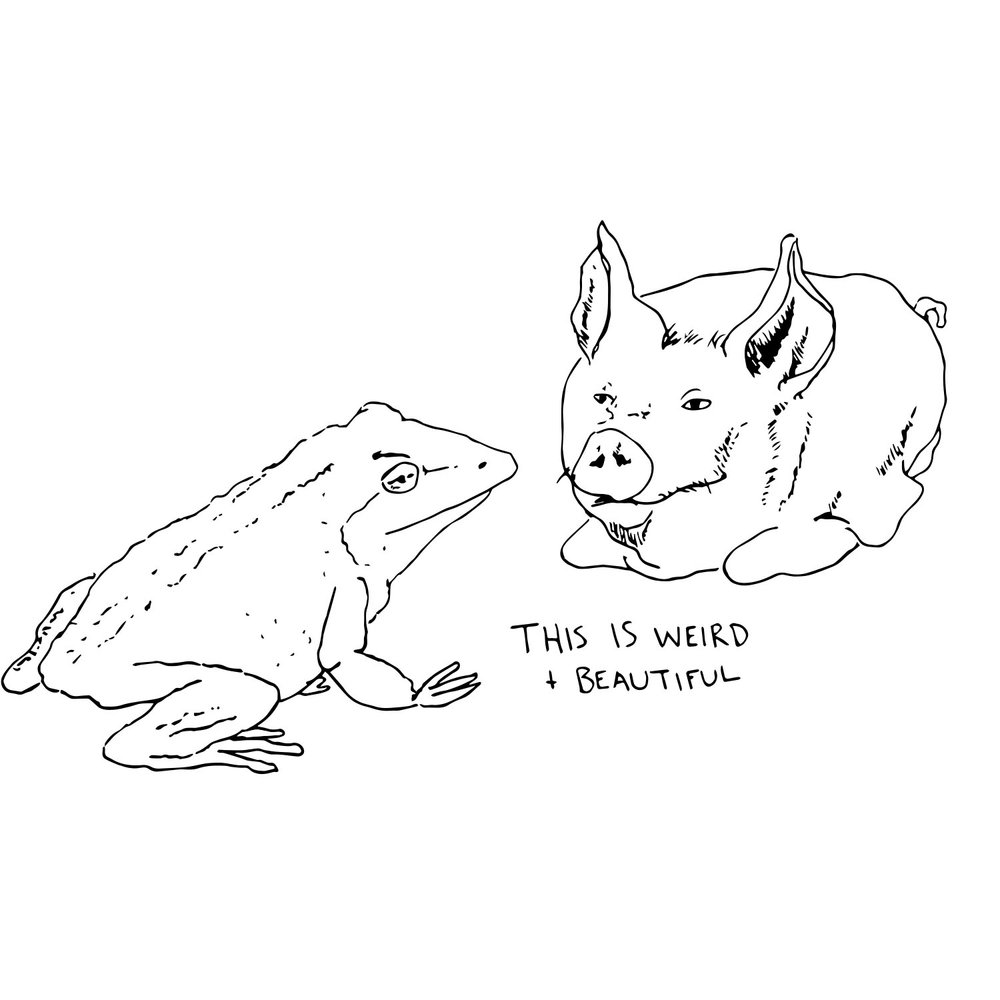 pig and frog.jpg