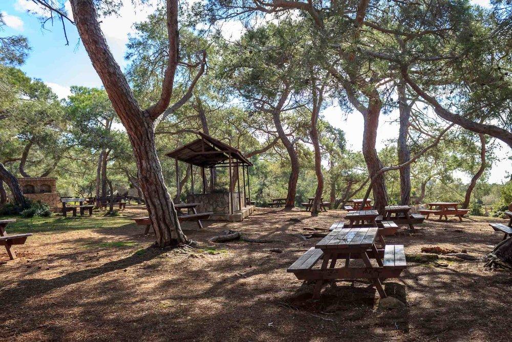 Forest picnik site