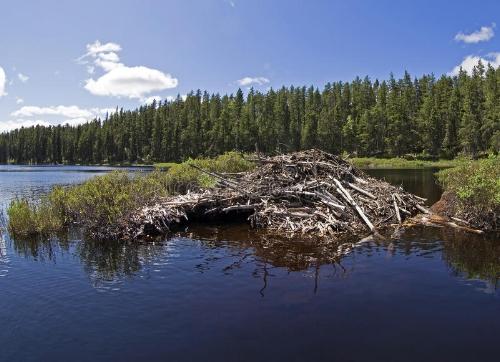 beaver-house-beautiful-calm-lake-55604532.jpg