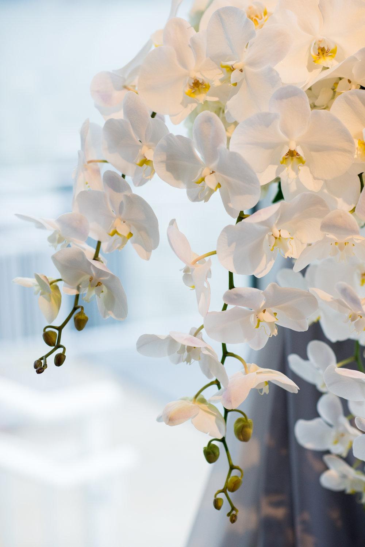 white phaleonopsis