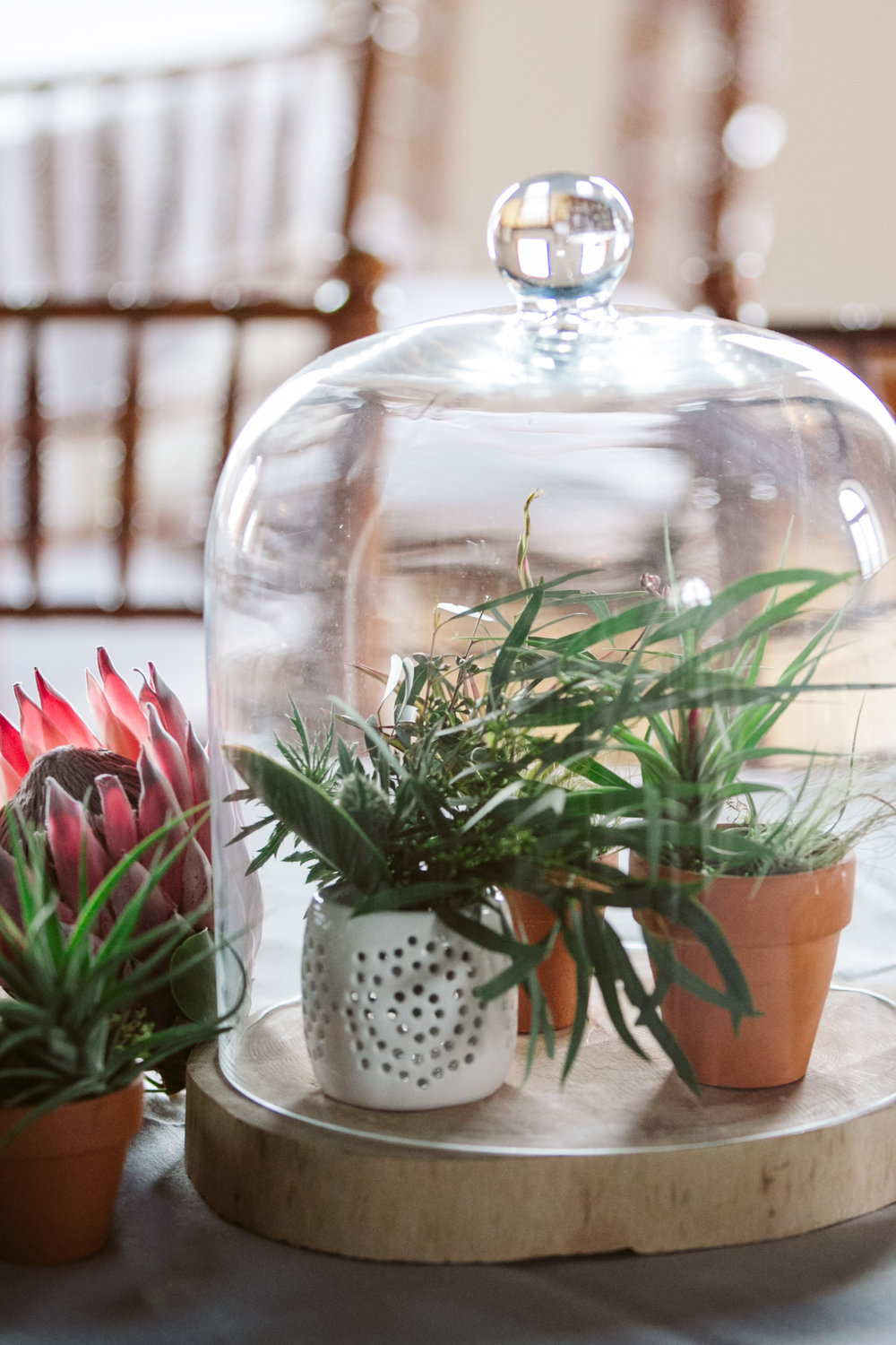 Airplant centerpiece