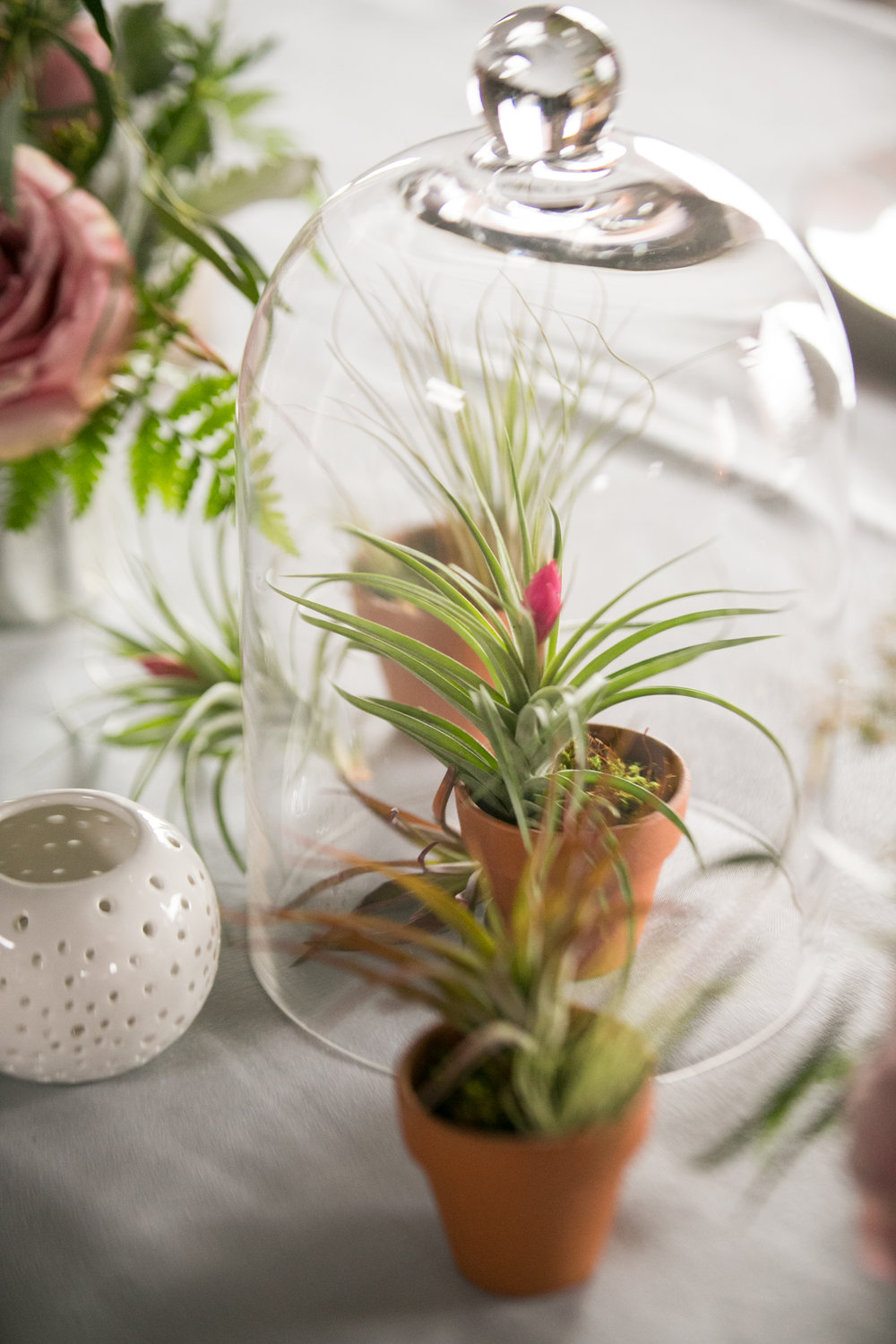 Tilandsia and cloche centerpiece