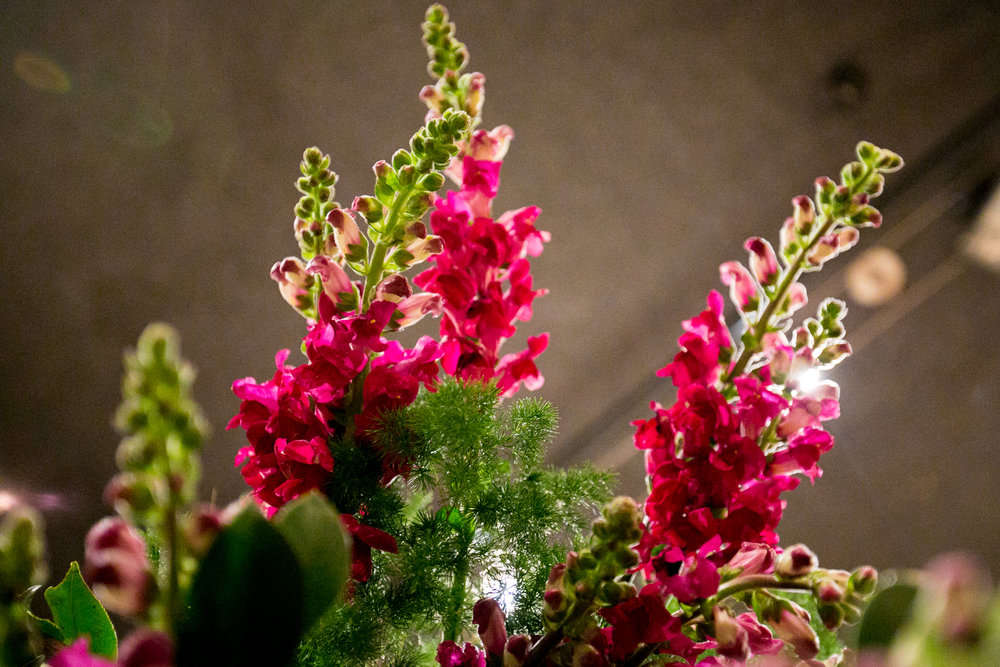 Snapdragon close-up