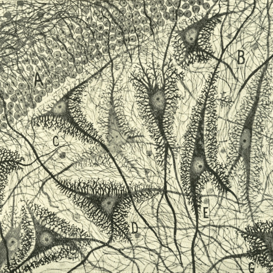 FieldTripsThe Beautiful Brain- The Drawings of Santiago Ramón y Cajal.jpg