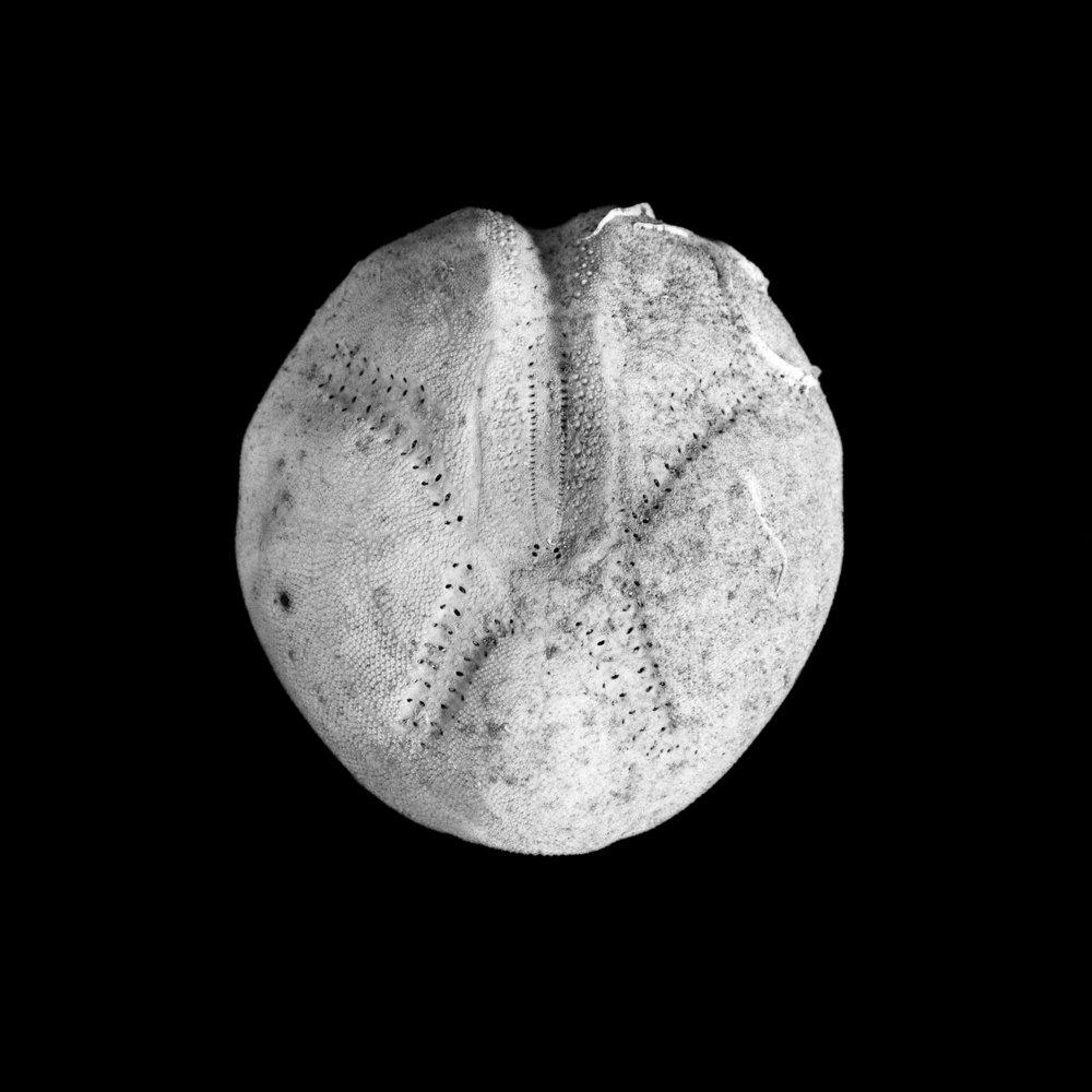 FU Fossils_78_01.jpg